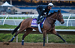 DEL MAR, CA - NOVEMBER 01: Paulassilverlining, owned by Juddmonte Farms, Inc. and trained by Chad C. Brown, exercises in preparation for Breeders' Cup Filly & Mare Sprint at Del Mar Thoroughbred Club on November 1, 2017 in Del Mar, California. (Photo by Jesse Caris/Eclipse Sportswire/Breeders Cup)