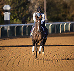 Bombard, trained by Richard E. Mandella, exercises in preparation for the Breeders' Cup Turf Sprint at Keeneland 11.03.20.