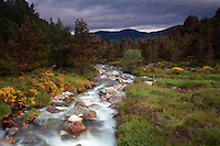 The Allt Mor, Glenmore National Nature Reserve, Cairngorm National Park, Badenoch & Speyside