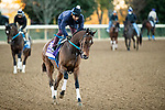November 4, 2020: Thoughtfully, trained by trainer Steven M. Asmussen, exercises in preparation for the Breeders' Cup Juvenile Fillies at Keeneland Racetrack in Lexington, Kentucky on November 4, 2020. Jon Durr/Eclipse Sportswire/Breeders Cup