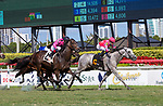 February 27, 2021: #6 Venezuelan Hug, ridden by Junior Alvarado, gets the bob over #2 Olympic Runner and John Velazquez to win the Canadian Turf Stakes (Grade 3) on the turf on Fountain of Youth Day at Gulfstream Park in Hallandale Beach, Florida. Liz Lamont/Eclipse Sportswire/CSM