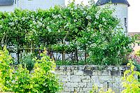 France, Indre-et-Loire, Lémeré, jardins et château du Riveau au printemps, pergola dans la cour du château