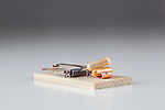 Mouse trap(s).  Generic mouse traps in clean cut, white background.  Baited with drugs.