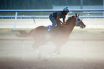 HALLANDALE BEACH, FL - JANUARY 21: California Chrome with exercise rider Dhigi Gladney put in their final work in preparation for the Pegasus World Cup at Gulfstream Park. (Photo by Arron Haggart/Eclipse Sportswire/Getty Images