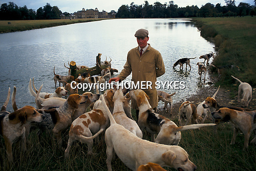Badminton, Gloucestershire. 1996<br /> Morning hound exercise at the Lake in Badminton Park with huntsman Charles Wheeler who is first Whipper-In before a days hunting 1990s.
