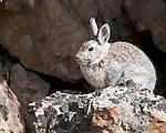 Rabbit Warming in the Sun