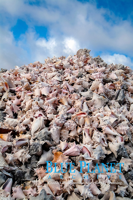 Heap of conch shells on a beach in Bonaire island, southern Caribbean Bonaire belongs to the Netherlands Antilles also know as the lesser Kingdom of the Netherlands, part of ABC islands