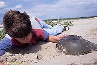 1Y47-329x  Horseshoe Crab - boy examining horseshoe crab -  Limulus polyphemus