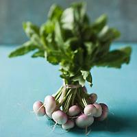 Gastronomie Générale:  Navets fane //  General Gastronomy: Turnips fane