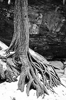 Roots of Winter