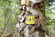 US National Forest boundary bearing tree marker on birch tree in the Stark Falls Brook drainage of Kinsman Notch in Woodstock, New Hampshire.