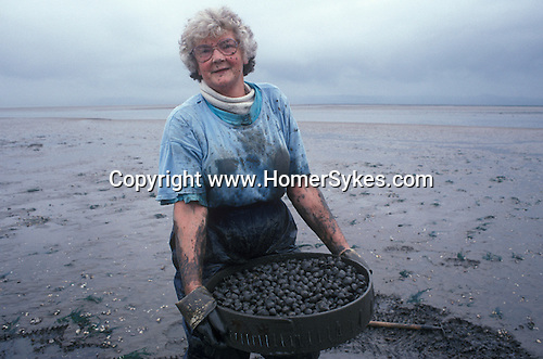 Cockle gathering Gower peninsular, Loughor Estuary, Wales UK. Lina Jones wife of Selwyn Jones founder of Selwyn's. 1997.