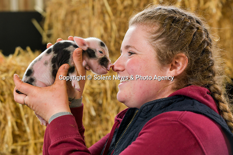 Pictured: Livestock manager Hollie Longman goes snout to nose as she holds up Titch, the smallest and one of the newly born Kunekune piglets at Longdown Activity Farm in the New Forest, Hants as she records a video for social media showcasing the new litter of piglets born this week.<br /> <br /> The farm have created a virtual experience for members called 'Longdown Little Farmers', designed to showcase the different animals on the farm through a series of individual videos for members of the public and schools who have been unable to visit the farm due to the coronavirus pandemic.<br />  <br /> Early last year the farm raised a staggering £40,000 through public donations after setting a target of £5,000 which has gone towards the upkeep of the farm during the three national lockdowns. <br /> <br /> © Jordan Pettitt/Solent News & Photo Agency<br /> UK +44 (0) 2380 458800