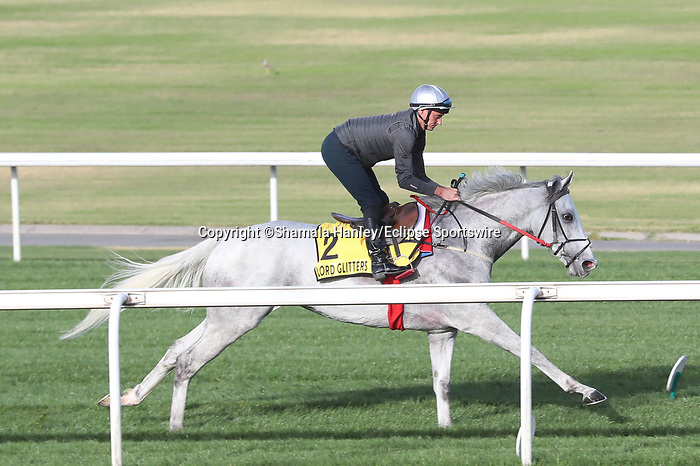 March 25, 2021: Dubai Turf contender Lord Glitters (FR) trains on the turf for trainer David O'Meara at Meydan Racecourse, Dubai, UAE.<br /> Shamela Hanley/Eclipse Sportswire/CSM