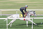 March 25, 2021: Dubai Turf contender Lord Glitters (FR) trains on the turf for trainer David O'Meara at Meydan Racecourse, Dubai, UAE.<br />