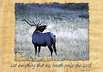 Inspirational image of a bull elk bugling in Estes Park, CO