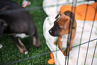 Puppies & Parties Presents Malibu Beach Puppy Party