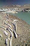 Bleached driftwood, Alsek Glacier, Glacier Bay National Park, Alaska, USA