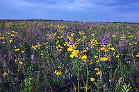 Hayden Prairie State Preserve, Howard County, Iowa