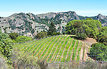 """Vineyard in Rockpile AVA, a winegrowing region in north Sonoma County. """"Rockpile"""" is an official viticultural appellation."""