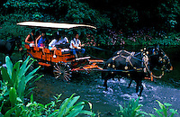 A family on vacation taking the wagon trail ride crossing the river at the bottom of Waipio Valley on the Big Island of Hawaii.