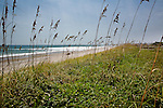 Sea Oats, Wrightsville Beach, NC, USA