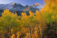 Aspens and Wheeler Peak<br /> Inner Basin<br /> Great Basin National Park<br /> Snake Range,  Nevada