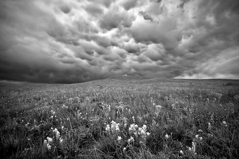 Thunderstorm clouds above Zumwalt Prairie with lime green Indian Paintbrush, Oregon