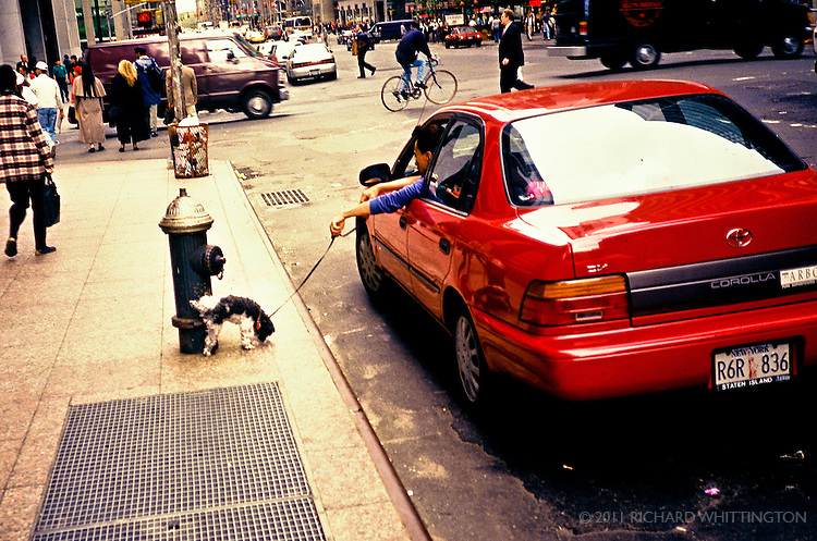 A young man holds the leash of his mutt out of his car's window as the mutt pees on a fire hydrant in the busy city.