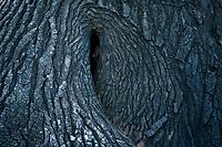 Tree trunk bowl. Kauai, Hawaii
