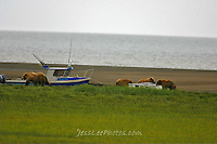 Alaska Brown Bear, Coastal Grizzly and cubs with boat. Grizzly Bear or brown bear alaska Alaska Brown bears also known as Costal Grizzlies or grizzly bears Grizzly Bear Photos, Alaska Brown Bear with cubs. Purchase grizzly bear fine art limited edition prints here Grizzly Bear Photo Bear Photos,