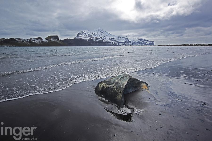 Whale bones on the beach at Heard Island, Antarctica