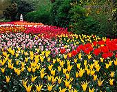Tom Mackie, FLOWERS, photos, Tulip Gardens in St. Jame's Park, London, England, GBTM955309-1,#F# Garten, jardín