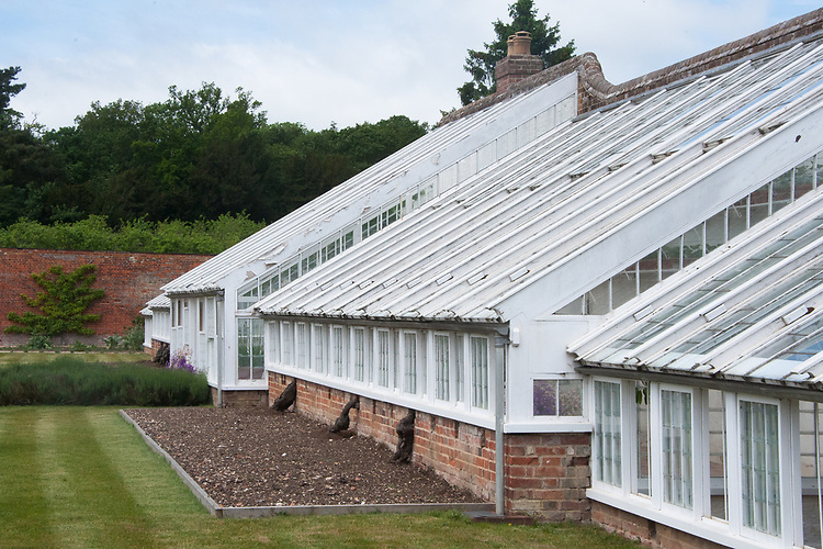 Greenhouses in the walled garden at Audley End, late May. Grape vines are planted outside, trained through holes in the walls, and then grown inside.