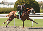 07 April 2011.  Hip #88 Mr. Greeley - Yard Art filly, consigned by Wavertree Stables.
