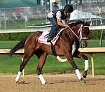 April 21, 2014 Unbridled Forever, ridden by Pedro Velez, gallops at Churchill Downs.  She is a Kentucky Oaks contender trained by Dallas Stewart and owned by Charles E. Fipke.  She was third in the Fair Grounds Oaks.