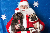 Peter and Izzy, pose for a holiday photo with Santa at Pet Pros in Redmond, WA to help raise money for Dogs Deserve Better on December 11, 2010. (photo by Karen Ducey)