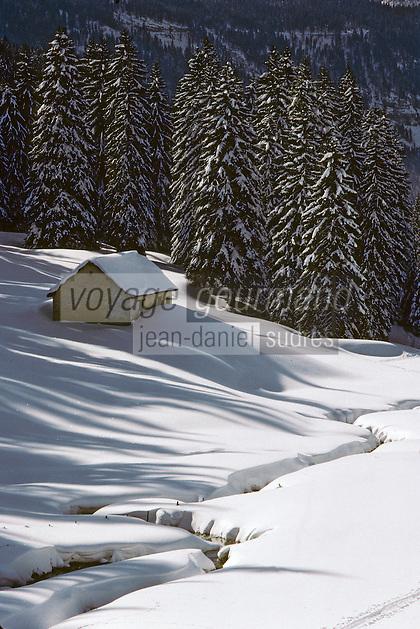Europe/France/Franche Comté/39 /Jura/Vallée de la Valserine: Ski de Fond dans la forêt de sapins enneigés // France, Jura, Cross-country skiing in the forest of snowy fir trees
