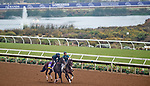 DEL MAR, CA - OCTOBER 28: Paradise Woods, owned by Steven Sarkowsky & Pam and Martin J. Wygod and trained by Richard E. Mandella, exercises in preparation for Longines Breeders' Cup Distaff at Del Mar Thoroughbred Club on October 28, 2017 in Del Mar, California. (Photo by Alex Evers/Eclipse Sportswire/Breeders Cup)
