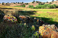 Colorful lichens and rolling hills. Merced Lichen Fields, California