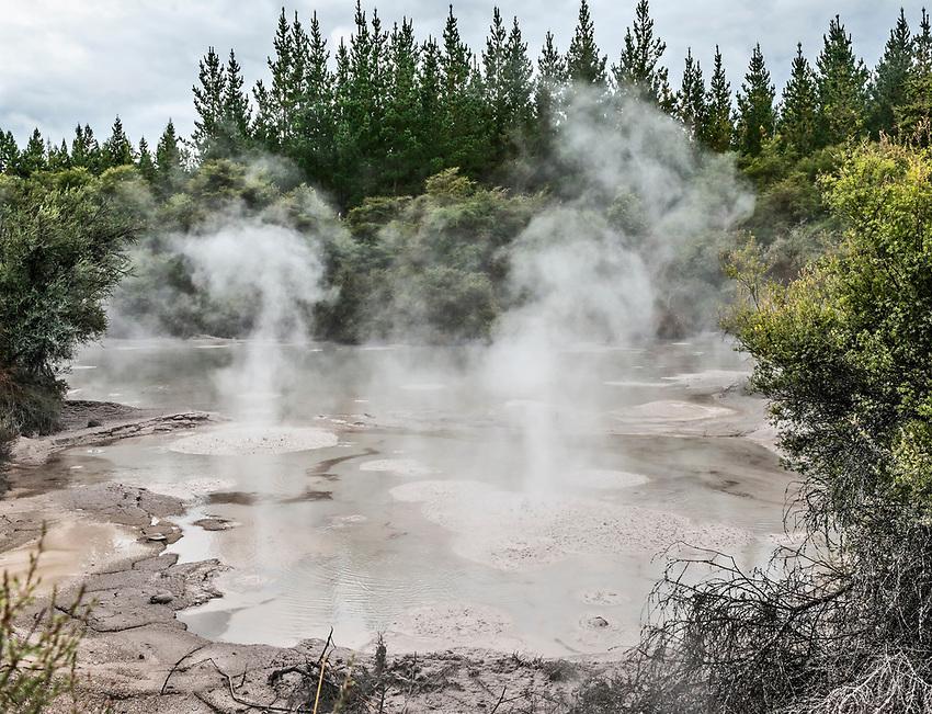Steaming mud flat at Te Puia thermal geothermal valley