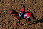 November 3, 2020: Jasper Prince, trained by trainer Hideyuki Mori, exercises in preparation for the Breeders' Cup Sprint at Keeneland Racetrack in Lexington, Kentucky on November 3, 2020. John Voorhees/Eclipse Sportswire/Breeders Cup/CSM