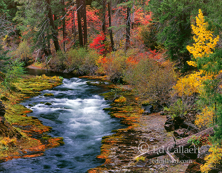 Upper Takelma Gorge, Rogue River National Wild and Scenic River, Rogue River National Forest, Oregon