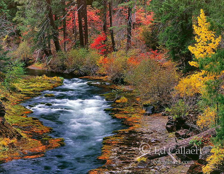 Upper Takelma Gorge, Rogue River National Wild and Scenic River, Rogue River National Forest, Oregon
