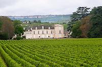 vineyard ch de meursault cote de beaune burgundy france