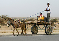 ETHIOPIA , oromia, donkey wagon on the road / AETHIOPIEN, Oromia, Eselskarren
