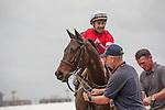 Jockey Joe Bravo and Naples Bay after winning the Marshuas River (G3T) at Gulfstream Park. Hallandale Beach, Florida 01-04-2014