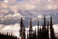 Mount Revelstoke National Park, Canadian Rockies, BC, British Columbia, Canada - Engelmann Spruce (Picea engelmannii) and Monashee Mountains