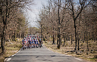 into the woods<br /> <br /> Stage 6: Peynier to Brignoles (176km)<br /> 77th Paris - Nice 2019 (2.UWT)<br /> <br /> ©kramon