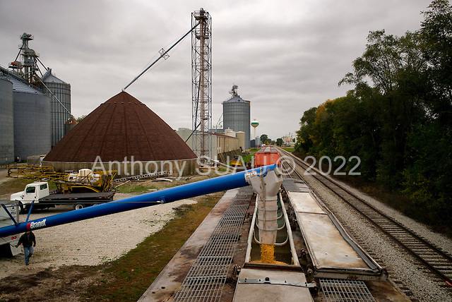 Atkinson, Illinois<br /> October 18, 2014<br /> <br /> Loading USDA certified organic corn corn on to a train car from the Shrock farm. As an Amish family farm Victor Shrock and his sons Derek and Kendall farm 1,500 acres. They average 200 to 220 bushels an acres of certified organic feed corn as well an certified organic egg production which houses 15,000 chickens. They also raise grass feed beef that is not certified organic.